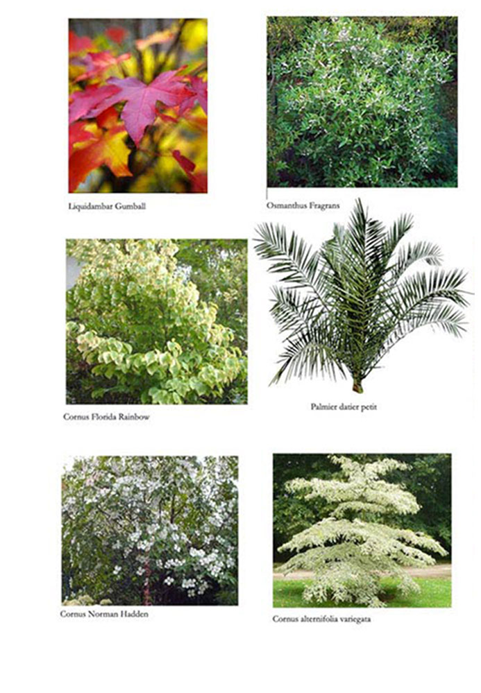 S-Palette-Vegetale-Arbres2G.jpg