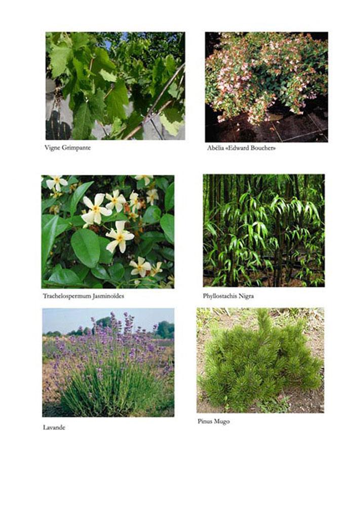 S-Palette-Vegetale-Arbustes1G.jpg