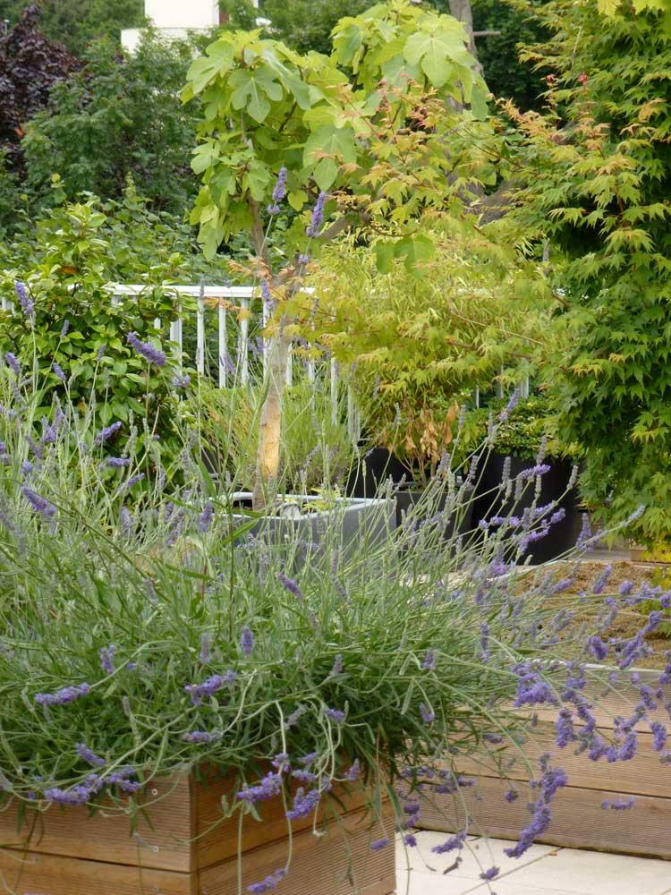 S-Vegetation.jpg